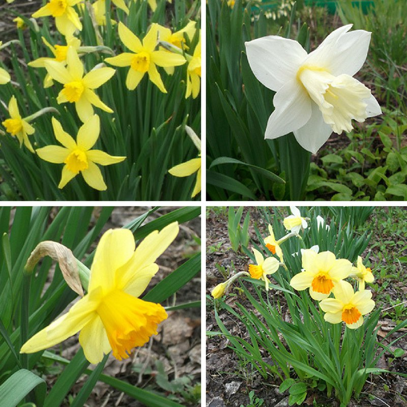весна на дворе