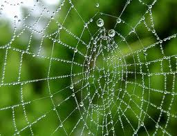 притча о пауках
